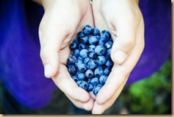 1361201_handful_of_wild_blueberries